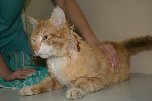 Порезы и ранения у собак и кошек