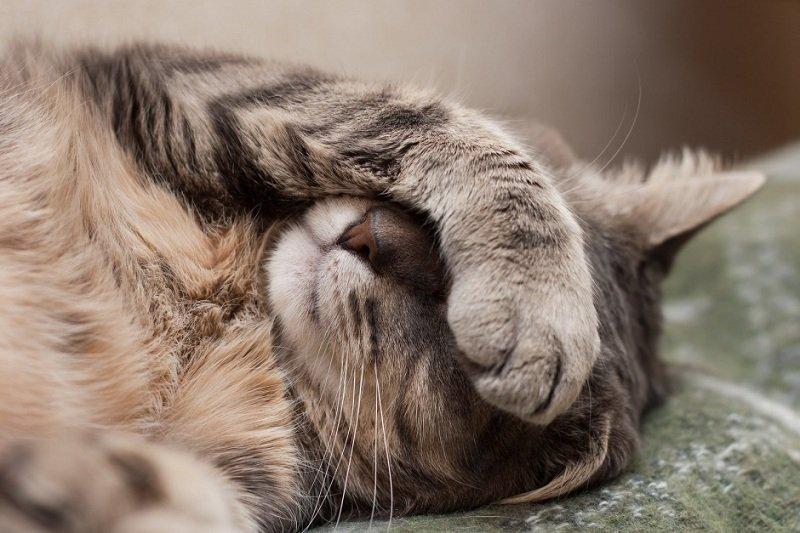 Советы по лечению ран у животных