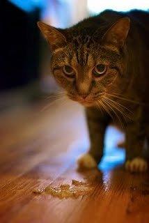 Как остановить рвоту у домашнего животного