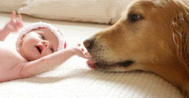 Лечение ревности у животных