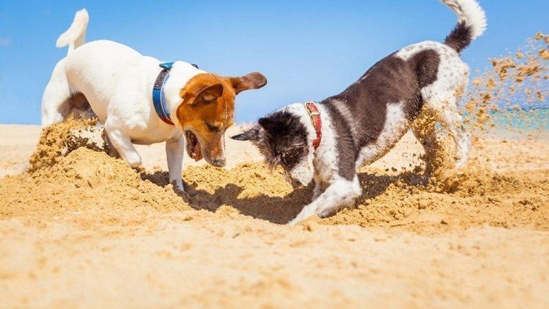 Зачем собаки копают землю