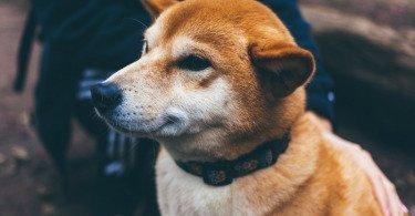 Средство, уменьшающее слюноотделения у собак и кошек