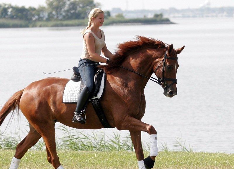Симптомы Лептоспироза у лошадей