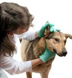 Лекарства для лечения болезни уха у кота (собаки)