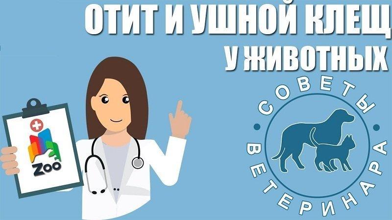 Лекарства для животных от ушного клеща