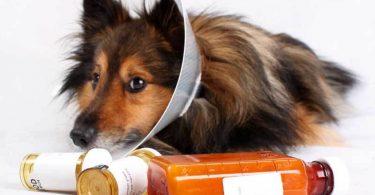 Лечение хромой лапы у собаки (кошки)