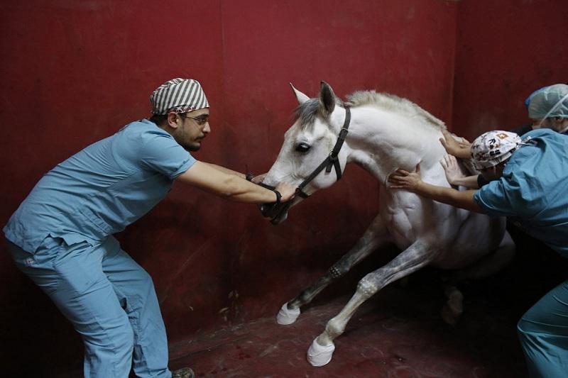 Нетрадиционное лечение животных