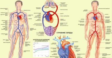 Сердечно-сосудистая система при ожоге