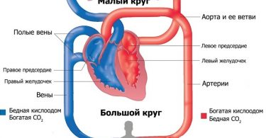 Показатели кровообращения при ожоге