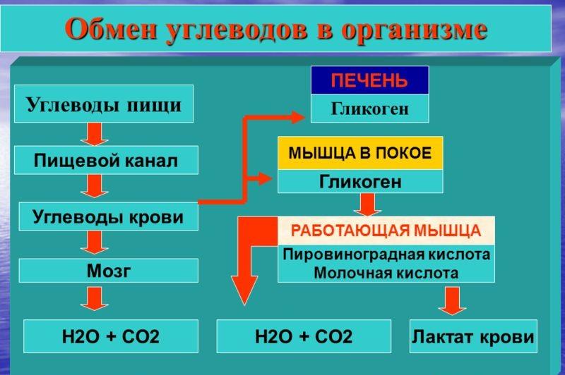 Углеводный обмен при ожоге