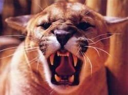 Причины агрессии у собак и кошек