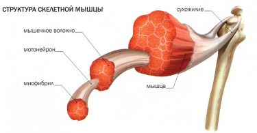 Чем вызвана боль в мышцах после тренировки