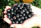 Черная смородина - полезные свойства