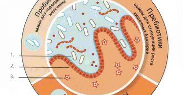 Дисбактериоз после антибиотиков