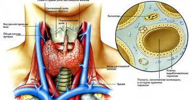 Симптомы гипотиреоза щитовидной железы
