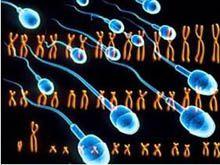 Сколько хромосом у человека