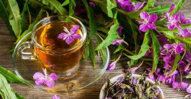 Иван чай: свойства и польза