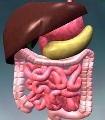 Кишечная инфекция - инкубационный период