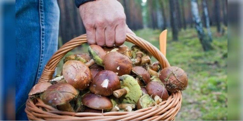 Легкое отравление грибами