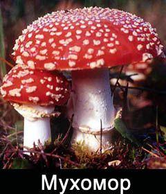 Отравление грибами - последствия