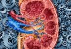 Острая почечная недостаточность: патогенез
