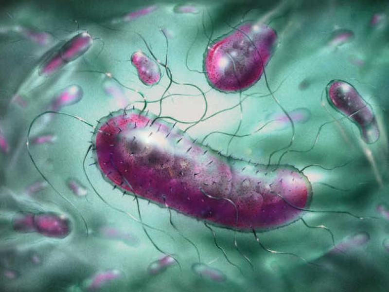 Кишечная палочка микробиология