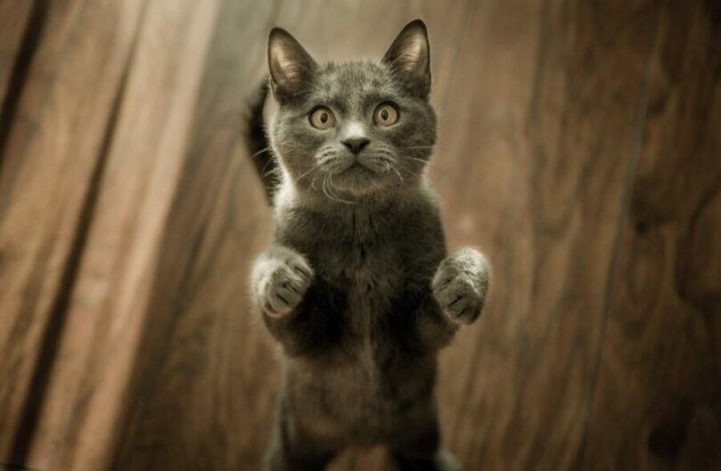 Корм бош для котов