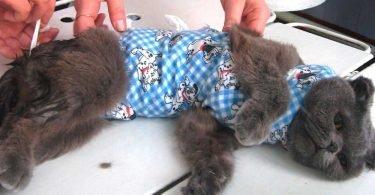 Уход за кошкой после стерелизации